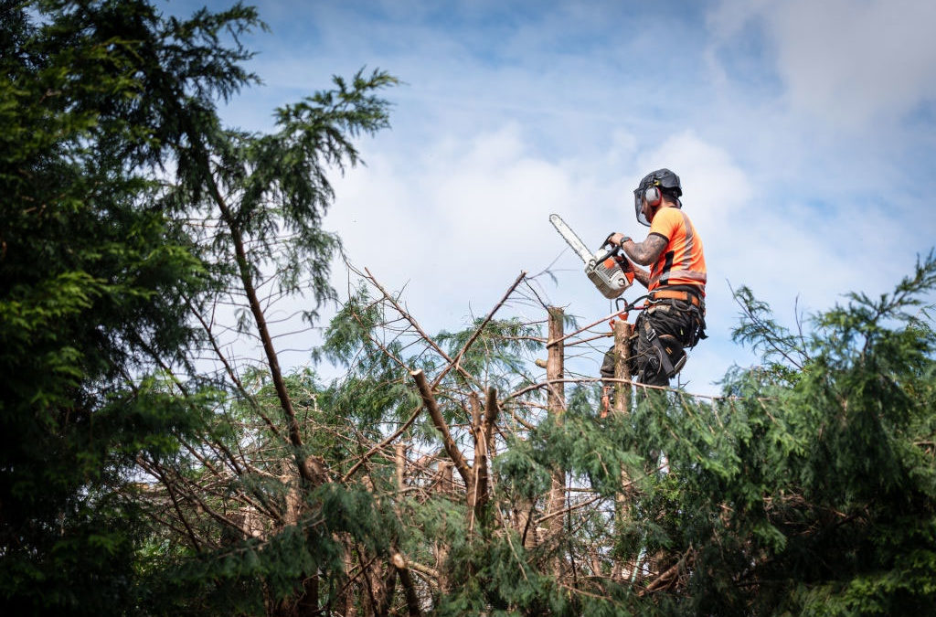 Factors to Consider When Choosing a Tree Trimming Company