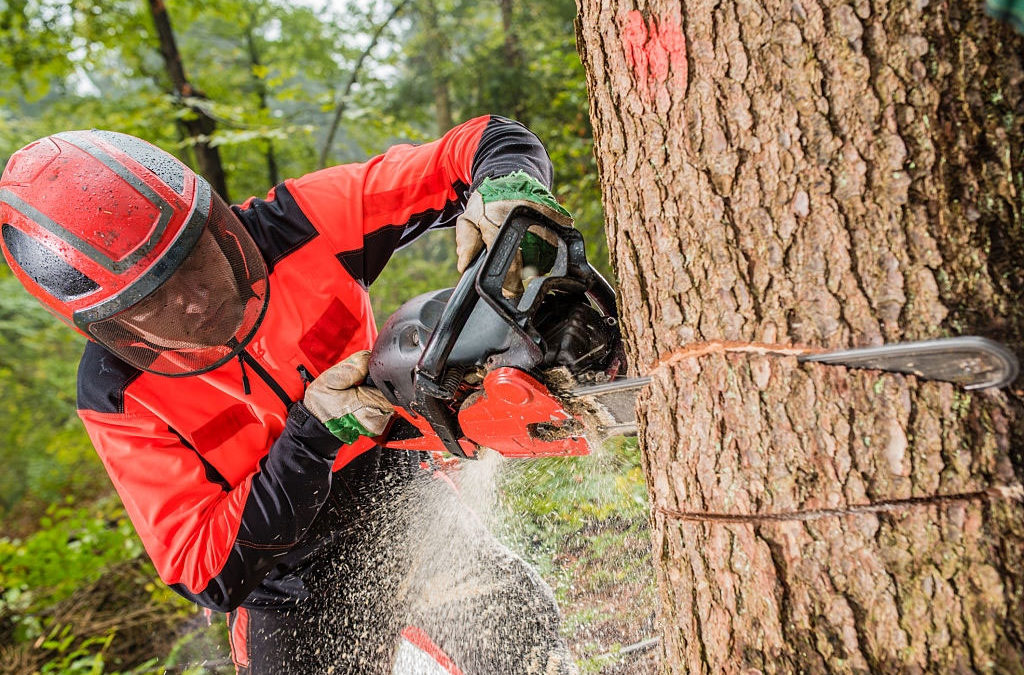 The Importance of Tree Removal