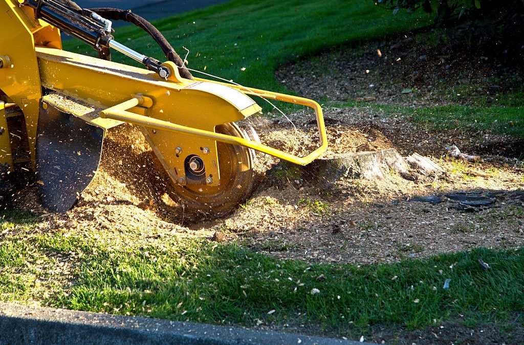 Stump Grinding Tools – The Right Finish to Complete the Best Projects
