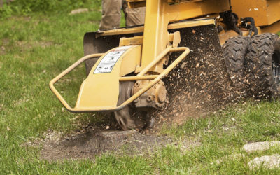 Using Stump Grinding For Finishing Your Timber