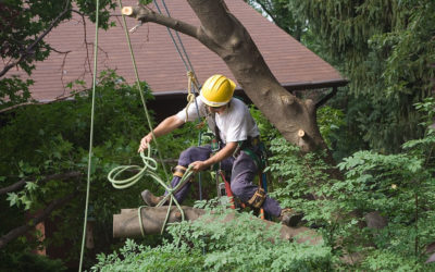 How To Estimate Tree Trimming Costs