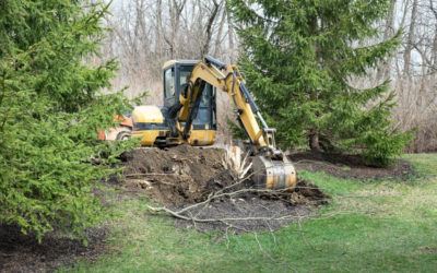 Stump Removal For People Who Are Experienced At It